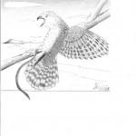 Disegno a penna, Studio d'autore 2010, Pasquale Mastrogiacomo Acerno(SA)